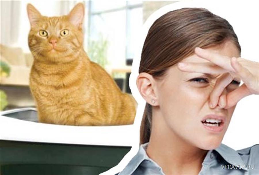 how do i get rid of cat litter smell